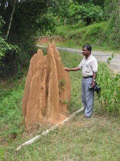 Termite mound Nagarahole National Park