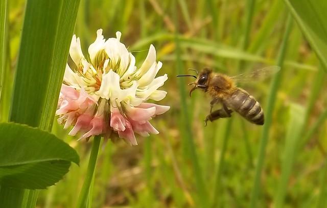 130/365 Bee Line