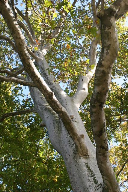 Un arbre à Paris