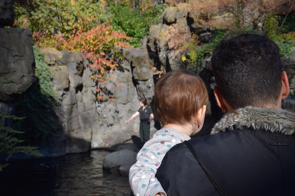 Con papá viendo cómo alimentaban a las focas.