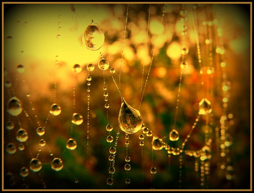 Perlen der Natur - pearls of nature