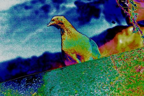 dream bird 2.jpg