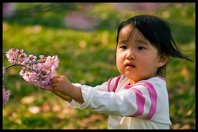 Sakura sweetie