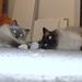 Small photo of Lissy+Finn