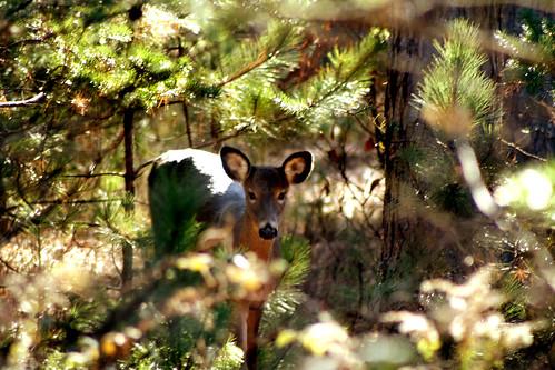 deer rebelxt higleyflow