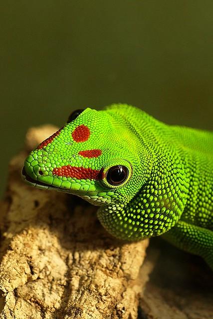 Friday Pic: Madagascar