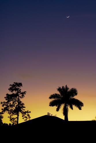 sunset moon silhouette palms twilight florida silouette naples