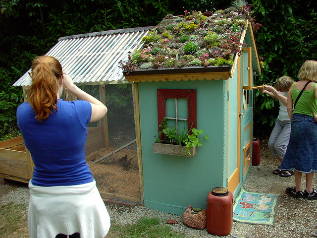 Green roof on chicken coop IMG_2478