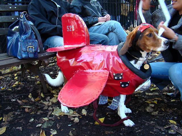 Did Barron Get A Dog Called Patton