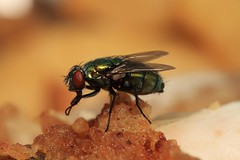 Damm fly