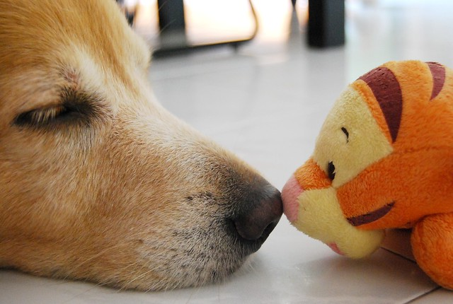 The dog story: Brucellosis in Dogs. Brucellosis In Dogs