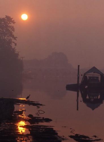stanleypark heron bird sunrise vancouver abigfave mywinners scannedslide 35mmfilm canada