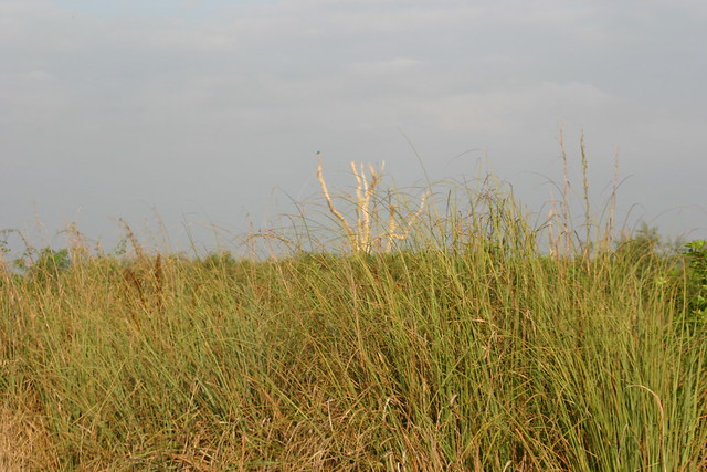 SawgrassRecovering