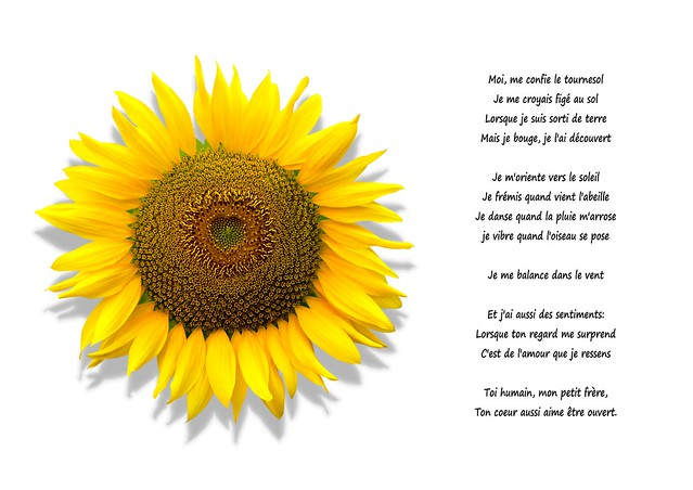 Sunflower Poem | Flickr - Photo Sharing!