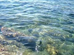 fish(0.0), marine biology(0.0), shore(0.0), underwater(0.0), coast(0.0), coral reef(1.0), water(1.0), sea(1.0), wave(1.0), shoal(1.0), reef(1.0),