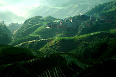 agriculture, field, mountain, valley, nature, mountain range, hill, hill station, green, forest, plateau, terrace, landscape, aerial photography, rural area, plantation, mountainous landforms,