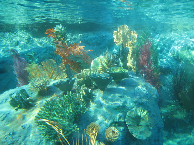 finding nemo coral reef - photo #6