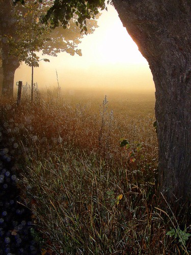 autumn mist nature beautiful october sweden loveit avenue soe höst 2007 musictomyeyes naturegroup beautifulearth supershot ekerö flickrsbest magicofnature golddragon ekebyhov beautifulcapture mywinners abigfave royalgroup platinumphoto peaceaward anawesomeshot flickrhearts magicalworlds ekebyhovsallén superbmasterpiece firsttheearth theothervillage superhearts flickrbronzeaward heartawards eperke exemplaryshotsflickrsbest photofaceoffwinner justlovelyphotos flickrsheaven betterthangood theperfectphotographer goldstaraward bestofautumnandwinter2007 flickrestrellas favesextreme bluespointofview goldendragonaward highqualityimages amazeandbeamazed thebestpicturegallery favesextreme060 ♡beautifulshot♡ 469photographers thedigitographer thelightpainterssociety doubledragonawards ☼θβĵσкŧĭ₣☼ artofimages visionaryartsgallery ablackrose platinumpeaceaward universeofnature visionaryartsgalleryplatinumgold bestpeopleschoice mygearandme level1photographyforrecreation level2photographyforrecreationsilver lightandshadowsofanytype