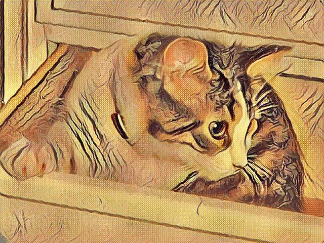 Baby Mitzi Exploring Gentle Colors Of Dawn Photo Art