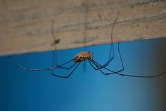 Tekawitha Woods Spider Walk