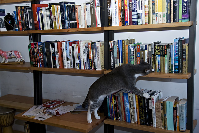 Smelling the new Shelves