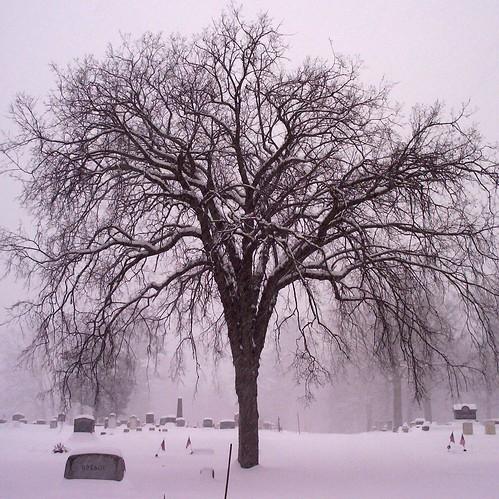 elm tree symbolism elm tree symbolism elm tree symbolism