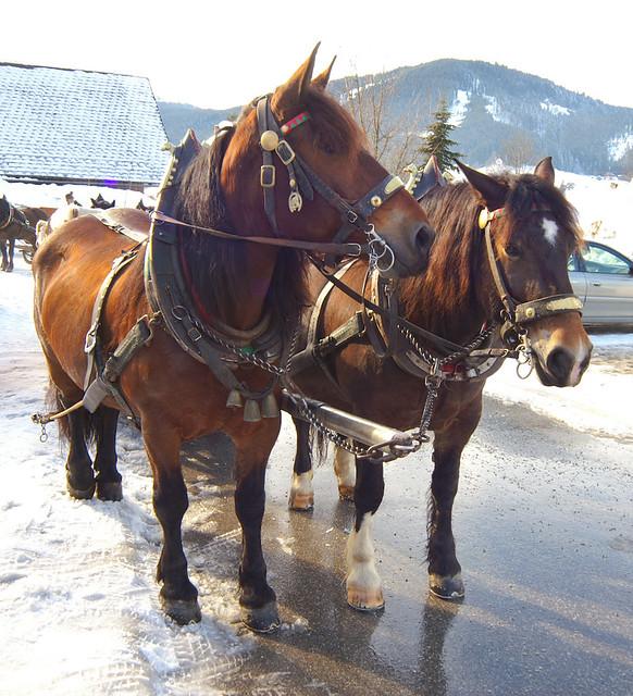 Austria. Horse carriage