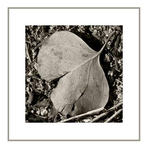 bw macro nature monochrome canon blackwhite debris soil dirt bananaleaf driedleaf aplusphoto pinoykodakero teampilipinas imago2007 pinoymacro