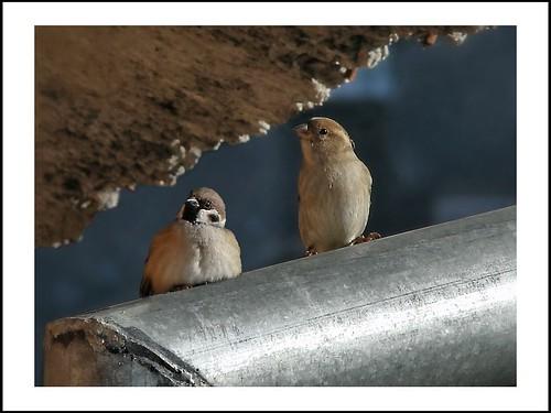 bird nature rivanova риванова