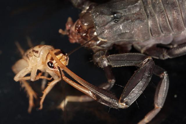 20110505_183046_scorpion