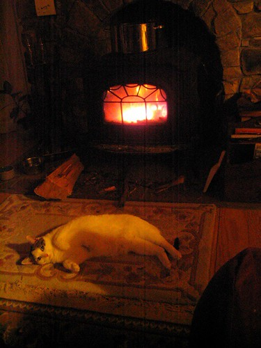 Every cat should have a hearth.JPG