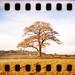 holga | 35mm | sprockets #3 by slimmer_jimmer
