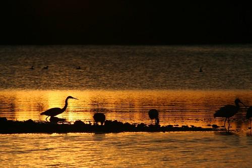 sunset supershot naturesilhouette goldstaraward