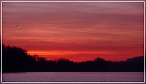 sunset sky sun lake france reflection bird nature water landscape lac lorraine vosges bouzey aplusphoto sanchey