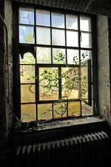 Fenster, Fenster, Fenster