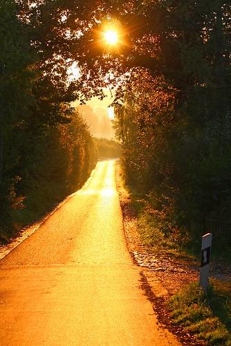 road street morning autumn light sun tree nature fog sunrise germany europe nebel alemania tyskland allemagne duitsland eos40d