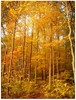 yellow forest by just jenn photography