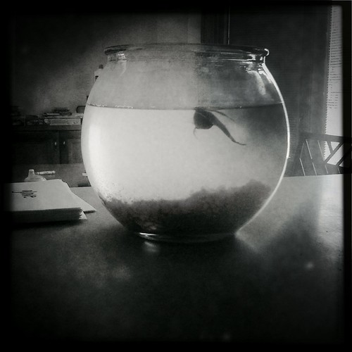 Day 3: Living In A Fish Bowl