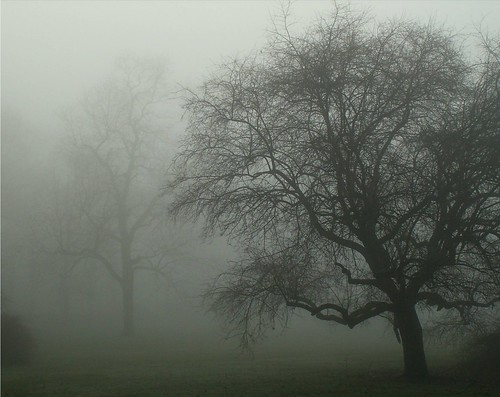 Moody Tree by Stanley Zimny