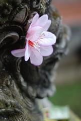 Bali - Novembre 2007