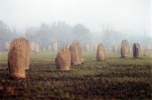 outbackanthills_jpg