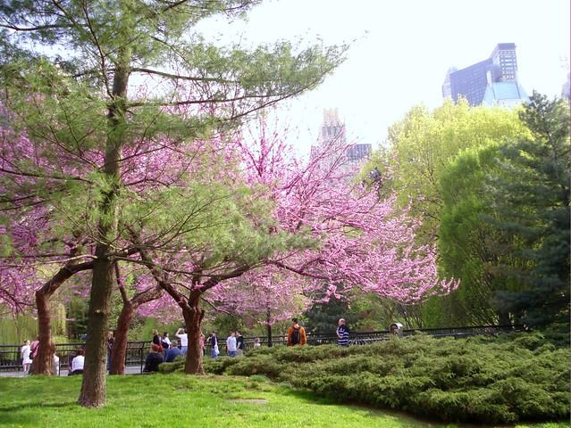 park spring blossom - photo #9
