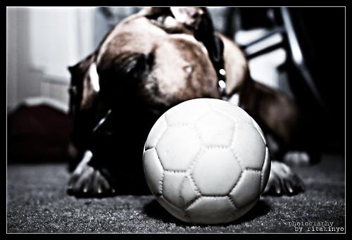 dog photoshop ball toy nikon pennsylvania explore boxer d200 kutya montgomerycounty welltaken nikond200 labda mazsi játék