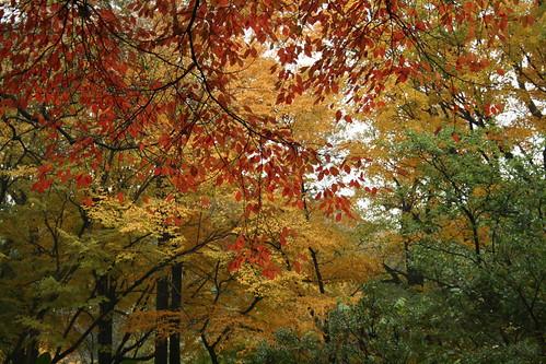 NFG Fall color