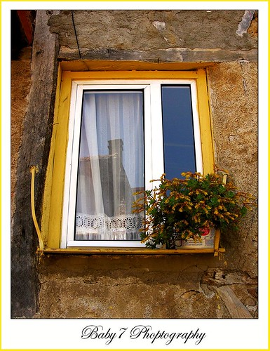 Yellow window and yellow  flowers
