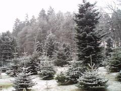 Winter, Inverno