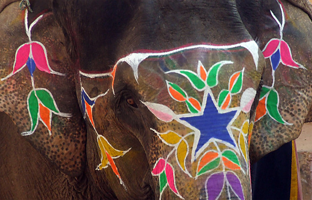 Decorated Elephant Pictures