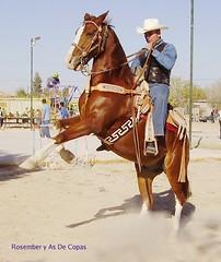animal sports, rodeo, equestrianism, western riding, stallion, equestrian sport, rein, sports, western pleasure, reining, cowboy,