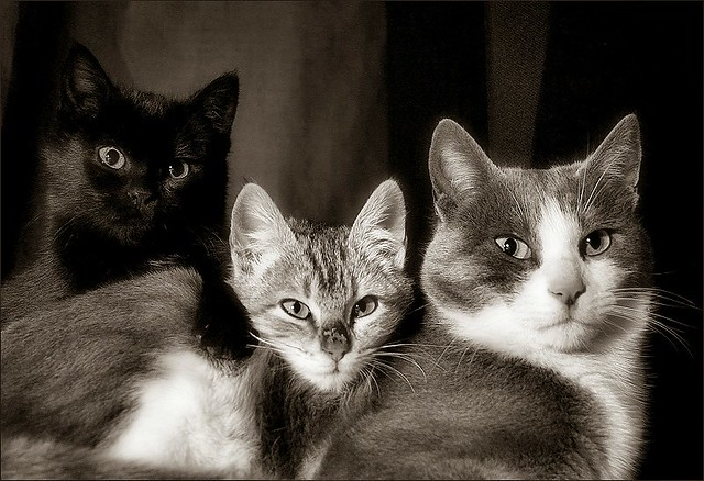 three cats / tres gats