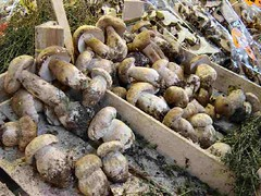 vegetable, produce, food, matsutake,